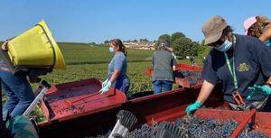 Bordeaux Harvest 2020