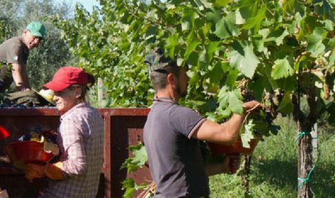 Harvest France